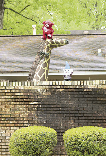 Bear riding giraffe