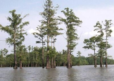 Felsenthal NWR to expand by 10,000 acres