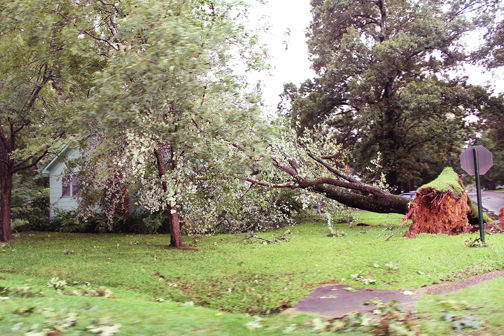 Downed tree on house