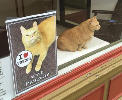 Pumpkin and Voting