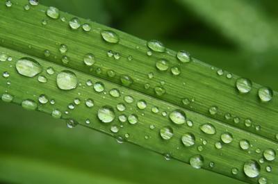 Daylily Close-Up