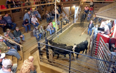 Livestock auctions have a bigger home near Athens | Local
