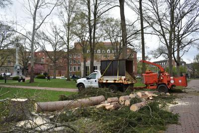 College Green tree disposal