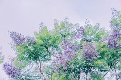 pexels-photo-1406863.jpeg