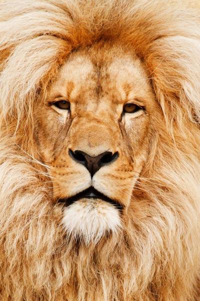 africa-african-animal-cat-41315.jpeg