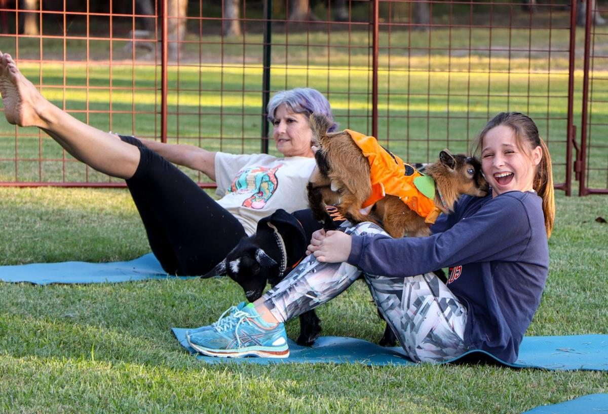Goat Yoga Brings Fun To Fitness News Athensreview Com