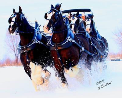 2013 Dashing through the snow.jpg