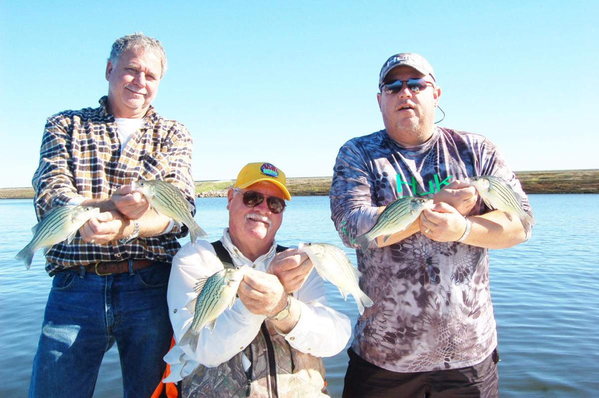 Outdoors Report The Ubiquitous Forgotten Yellow Bass Sports Athensreview Com