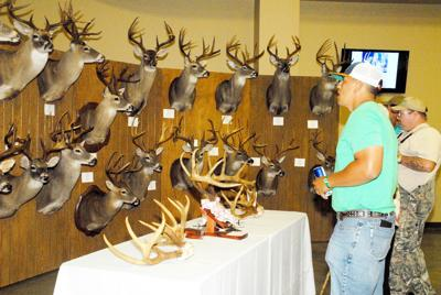 Buck head display