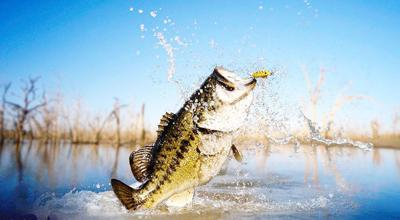 East Texas Fishing Report | Sports | athensreview com