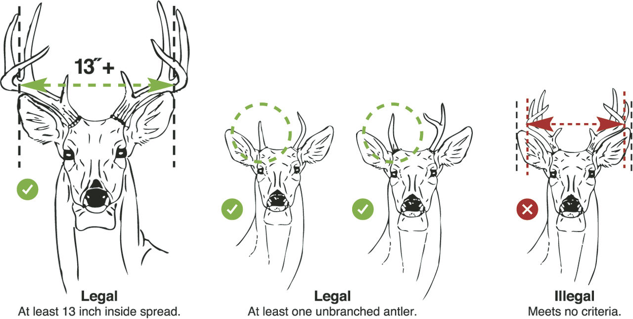 Biologists awaiting numbers on 10-year antler study