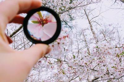 pexels-photo-979927.jpeg