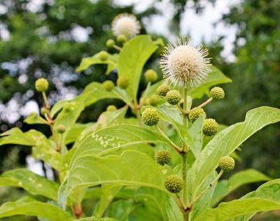 gardenIMG_9221.jpg
