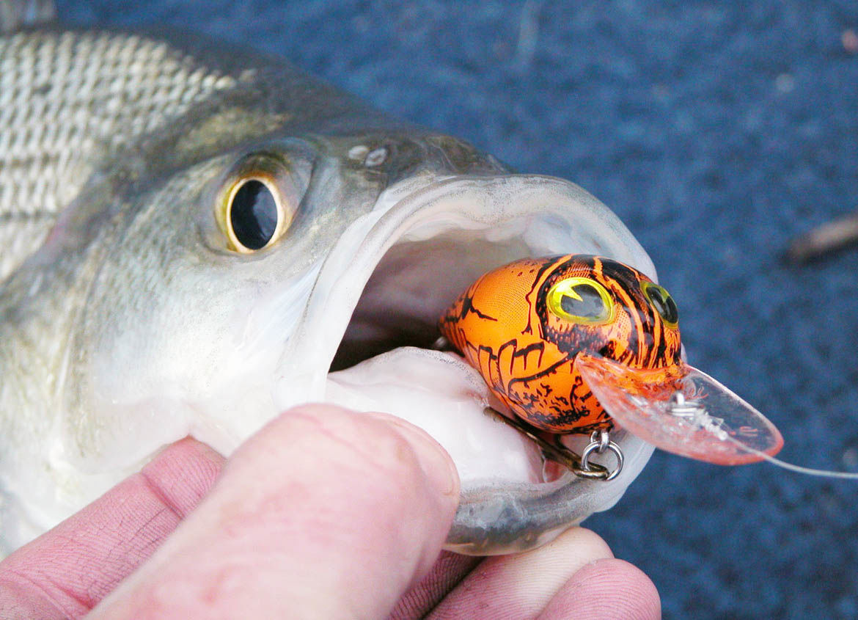 Crawfish crankbait