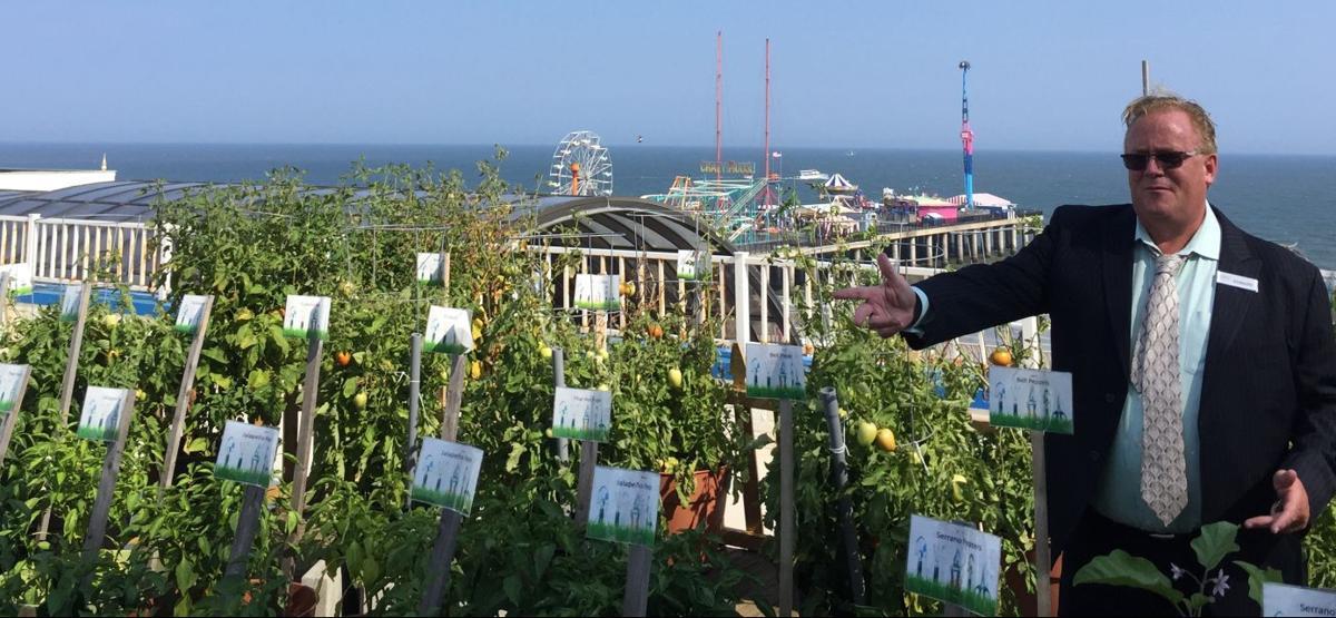 Resorts' rooftop garden