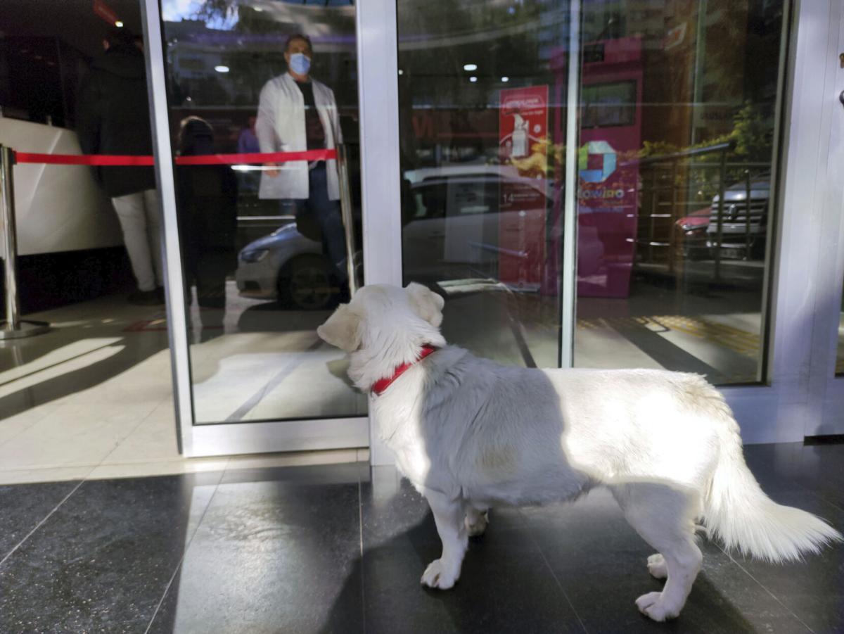 Turkey Dog Sick Owner