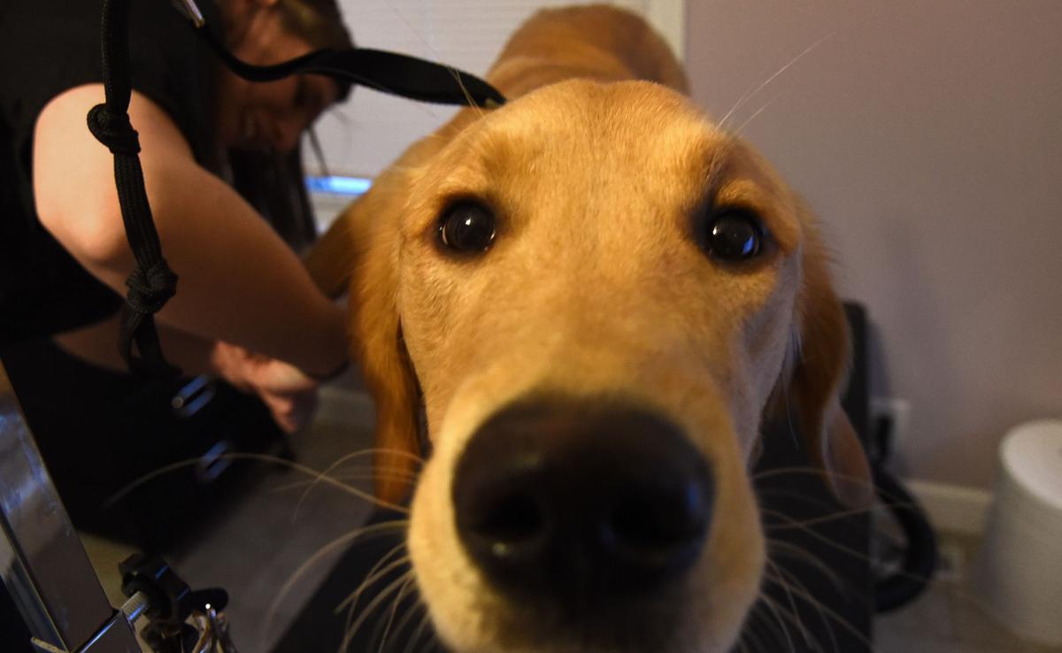 Dog Groomer 2