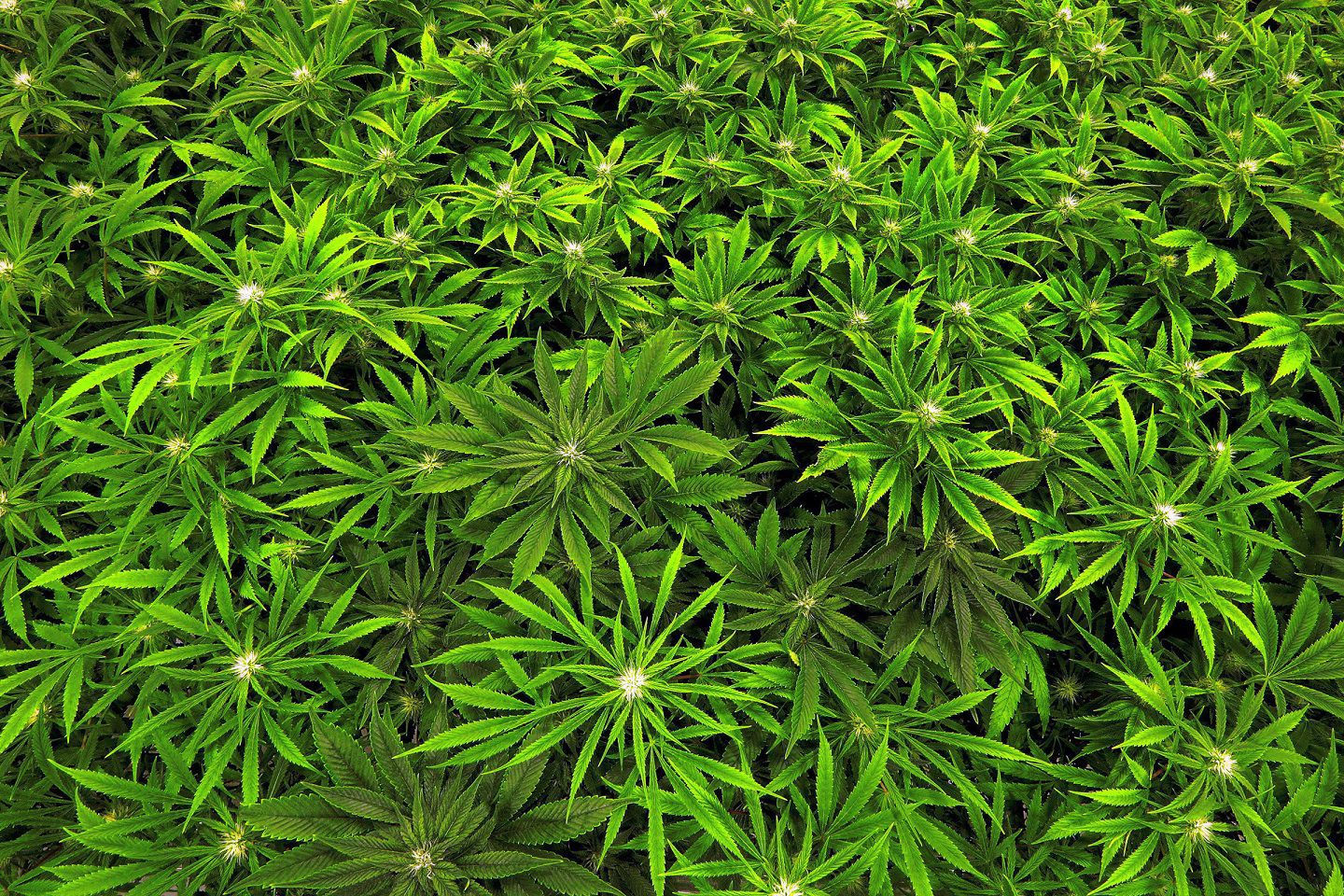 Medical marijuana dispensary reportedly coming to Chemung County