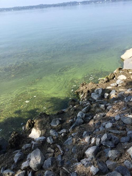 Cayuga Lake harmful algal bloom (copy)
