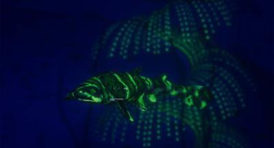 "Screen shot from Underwater Adventure Game ""Beyond Blue."""