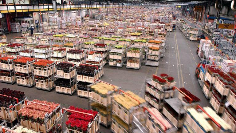 Cosentino: Inside the Aalsmeer Flower Auction | Lake Life