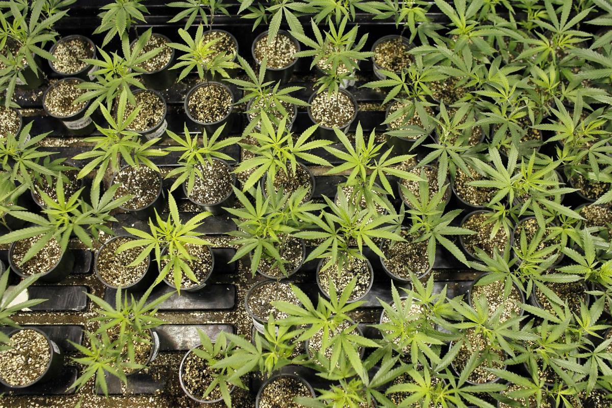Puerto Rico Medical Marijuana