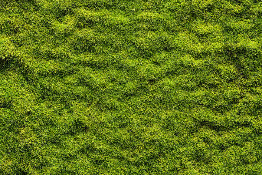Cosentino: How to use moss as a 'steppable' plant   Carmen Cosentino   auburnpub.com