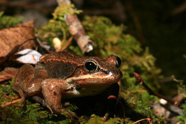 Baltimore Woods Nature Center sets March program schedule