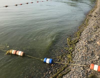 Suspected harmful algae blooms linger on Cayuga Lake
