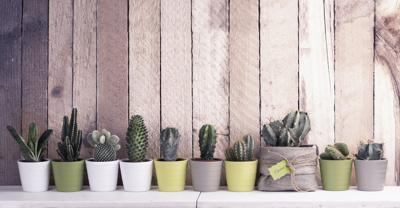 Cactus and succulents collection