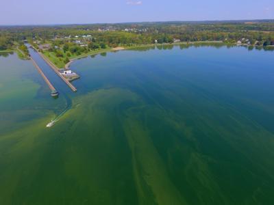 Harmful algae Owasco Lake
