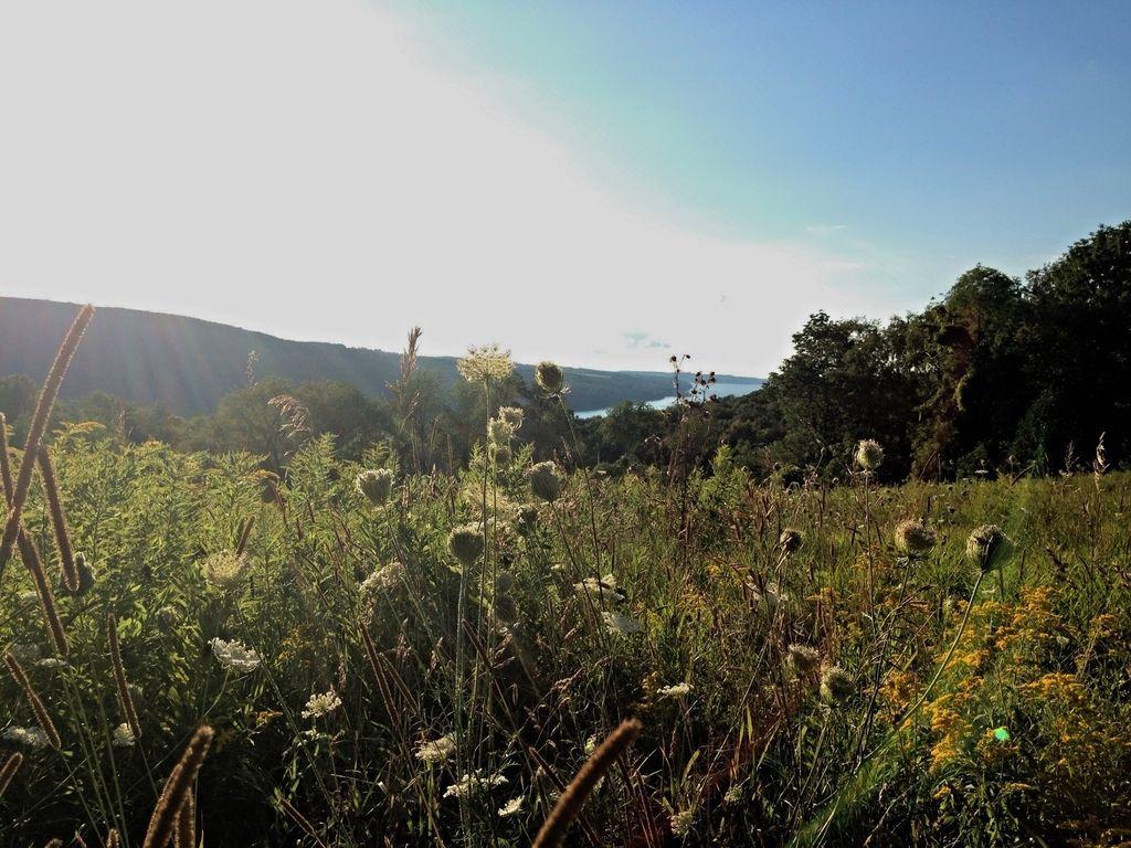 Finger Lakes Land Trust eyes funding for Skaneateles Lake conservation in region-wide report
