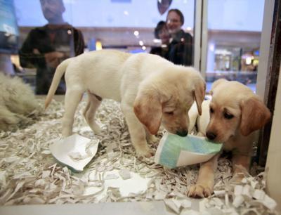Britain Puppy Sales