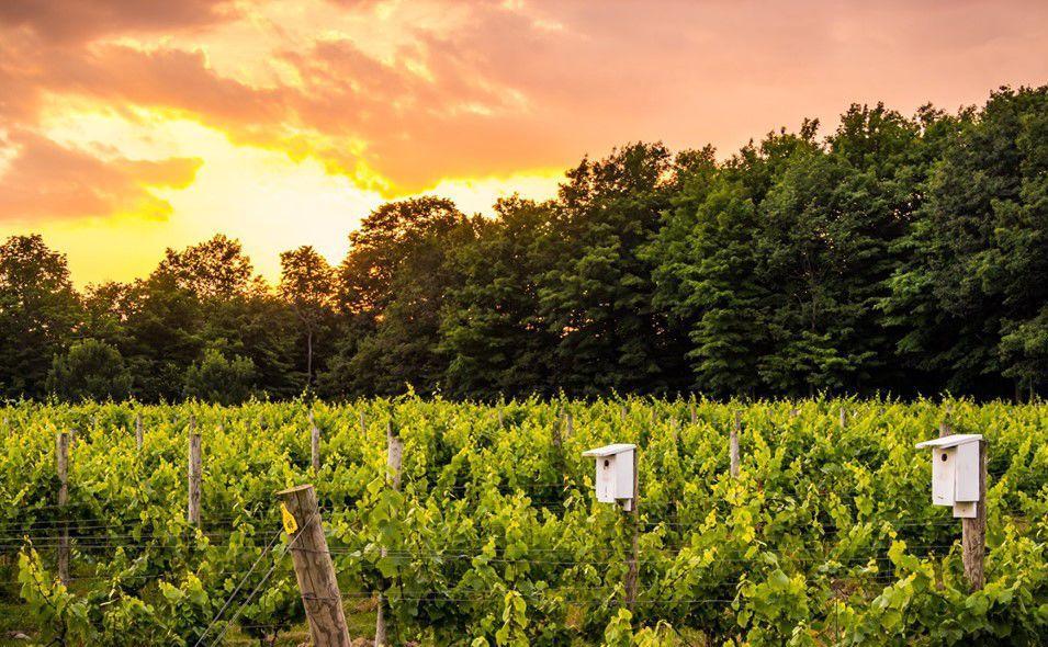 Colloca Estate Winery 2