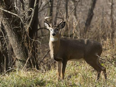 DEC warns drivers to use caution during deer mating season