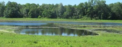 wetland at Montezuma