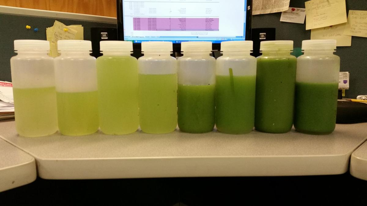 Blue-green algae samples
