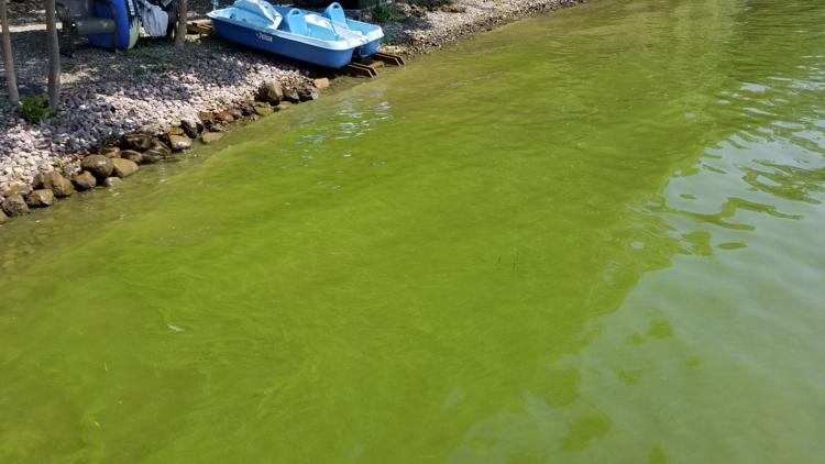 Auburn City Council to ask state for more specific harmful algae data