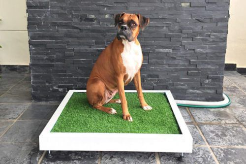 This Patch Of Fake Grass Flushes Like A Toilet For Your Dog