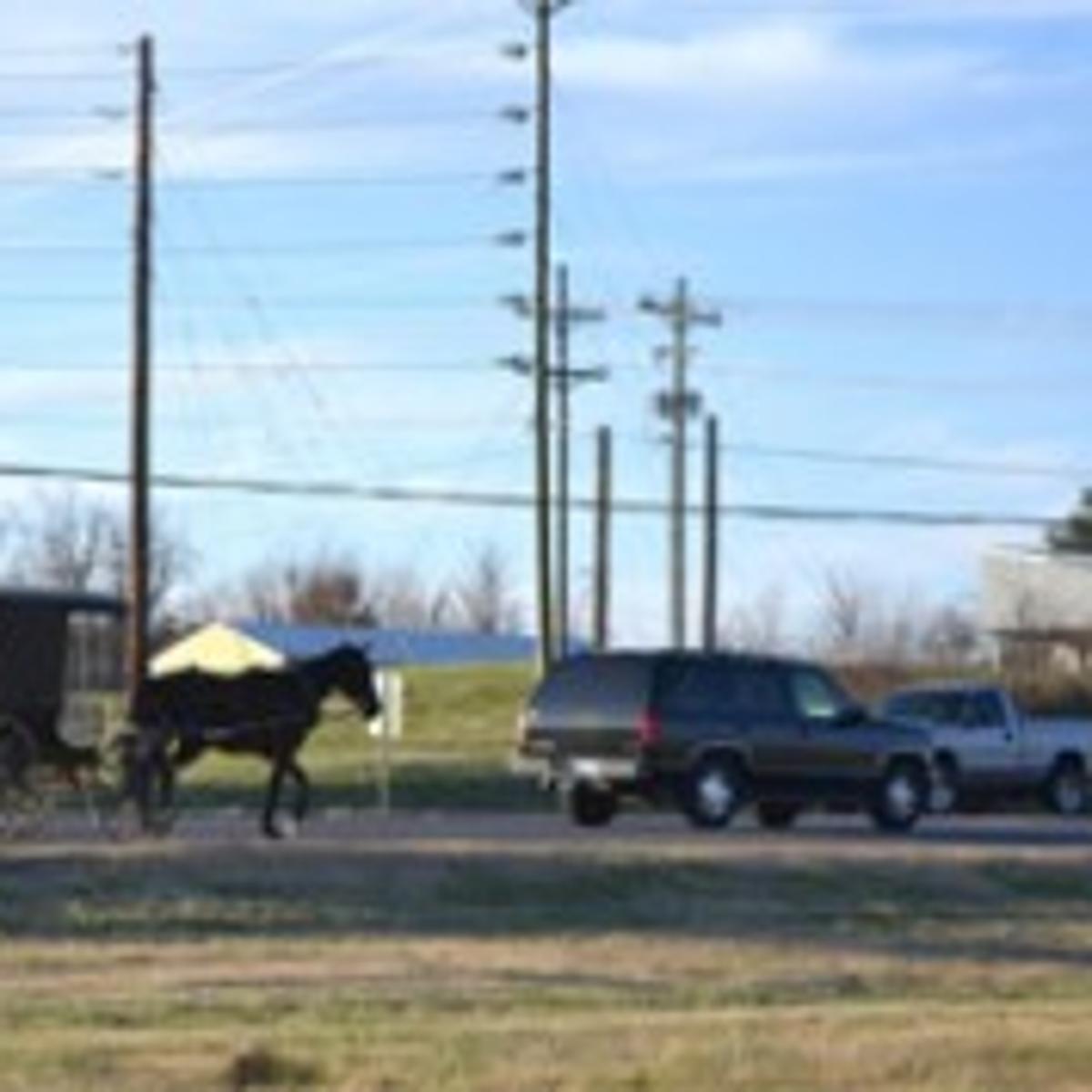 Amish won't budge on buggy fight | Lake Life | auburnpub com