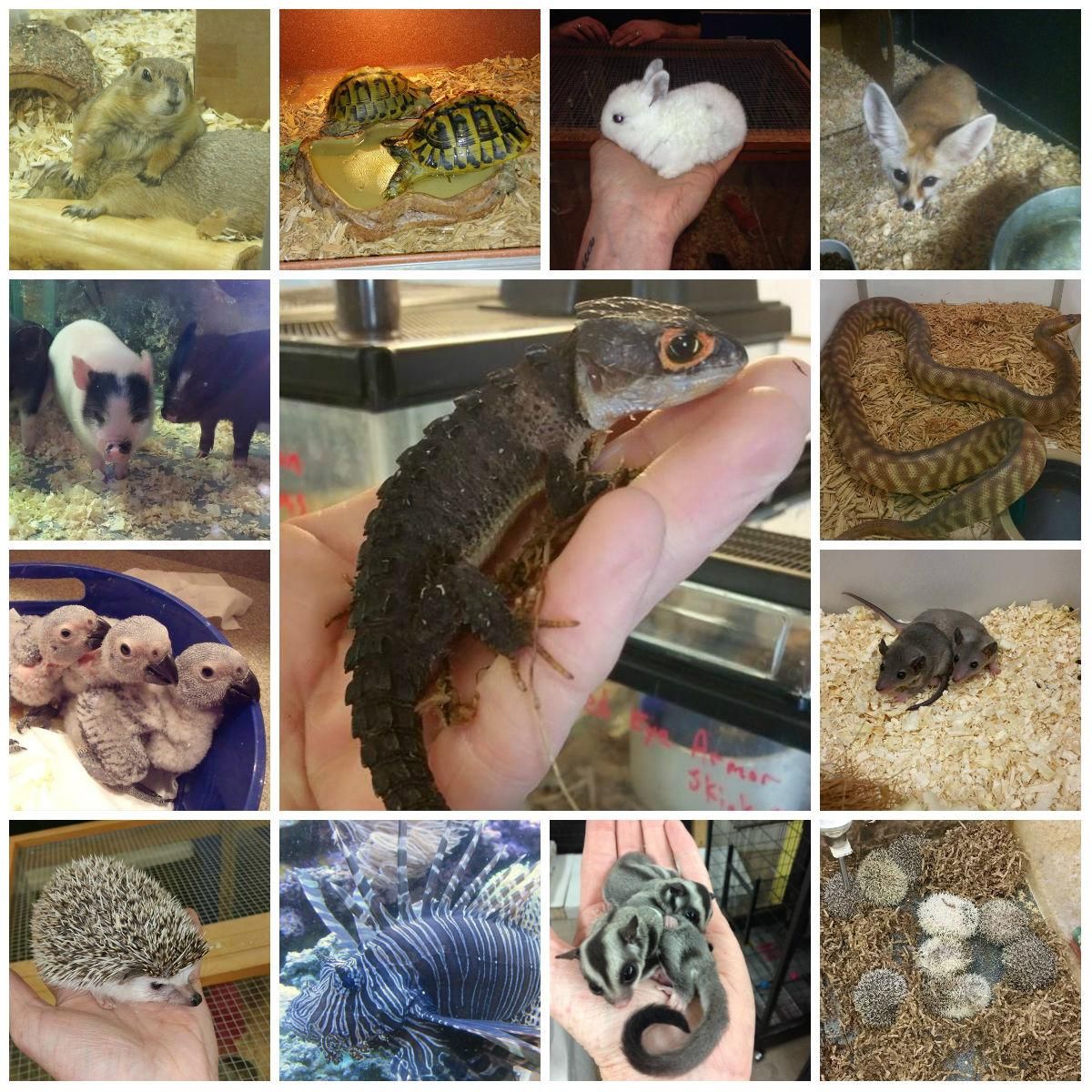 Ack's Exotic Pets | exotic pets | pet supplies | Cicero ...