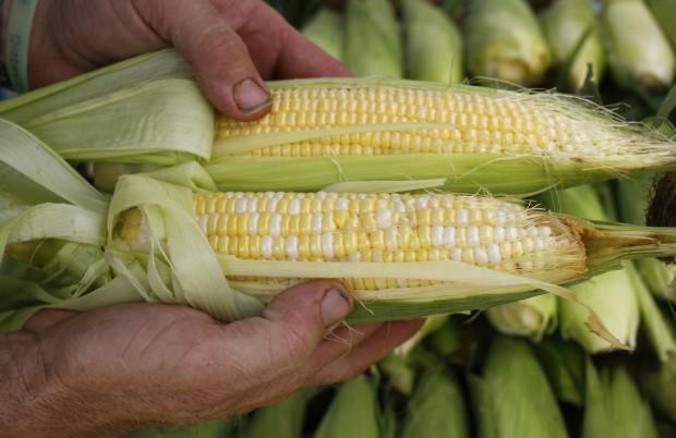 farmers market corn