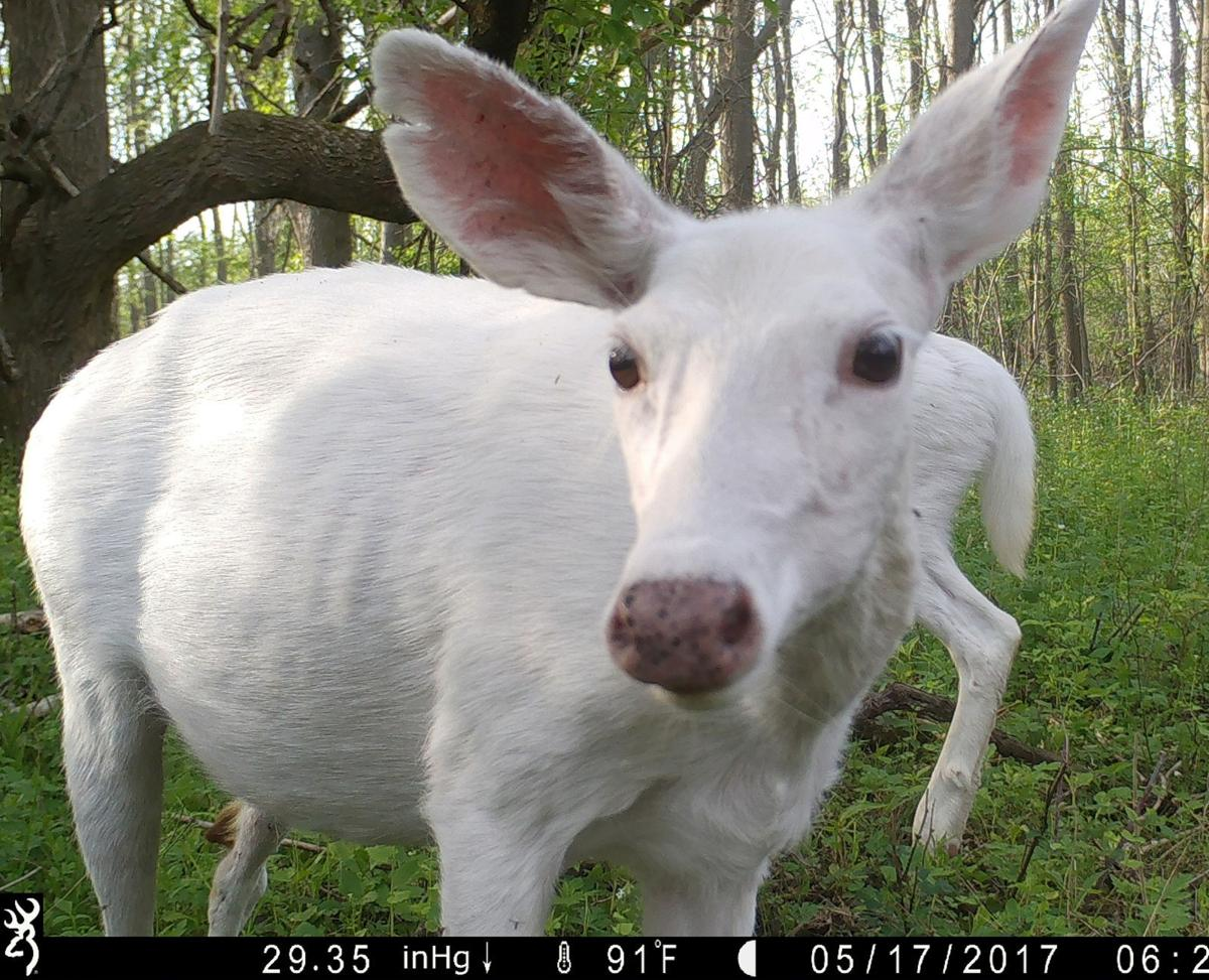 Ghost Deer Tours