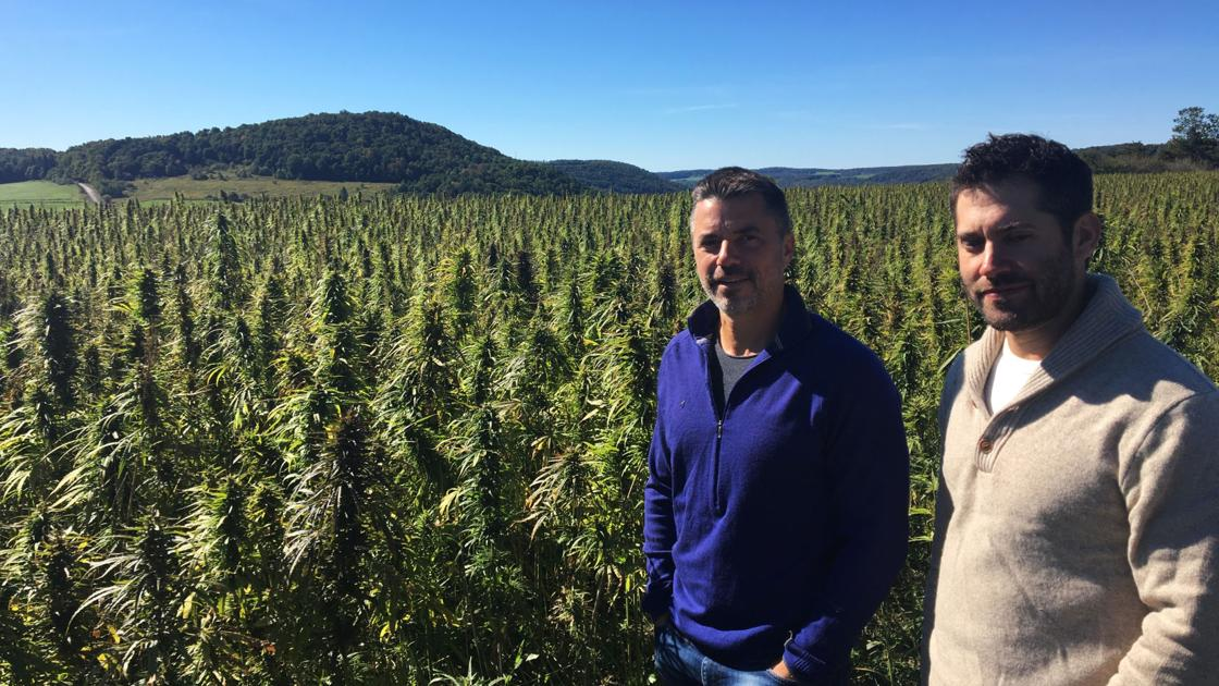 New York had hoped for a hemp boom, but another major player is dropping out