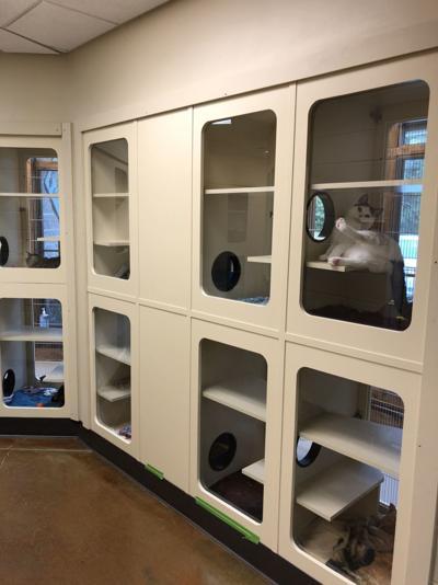 Cat condominiums