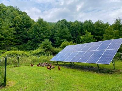 chickens and solar panel