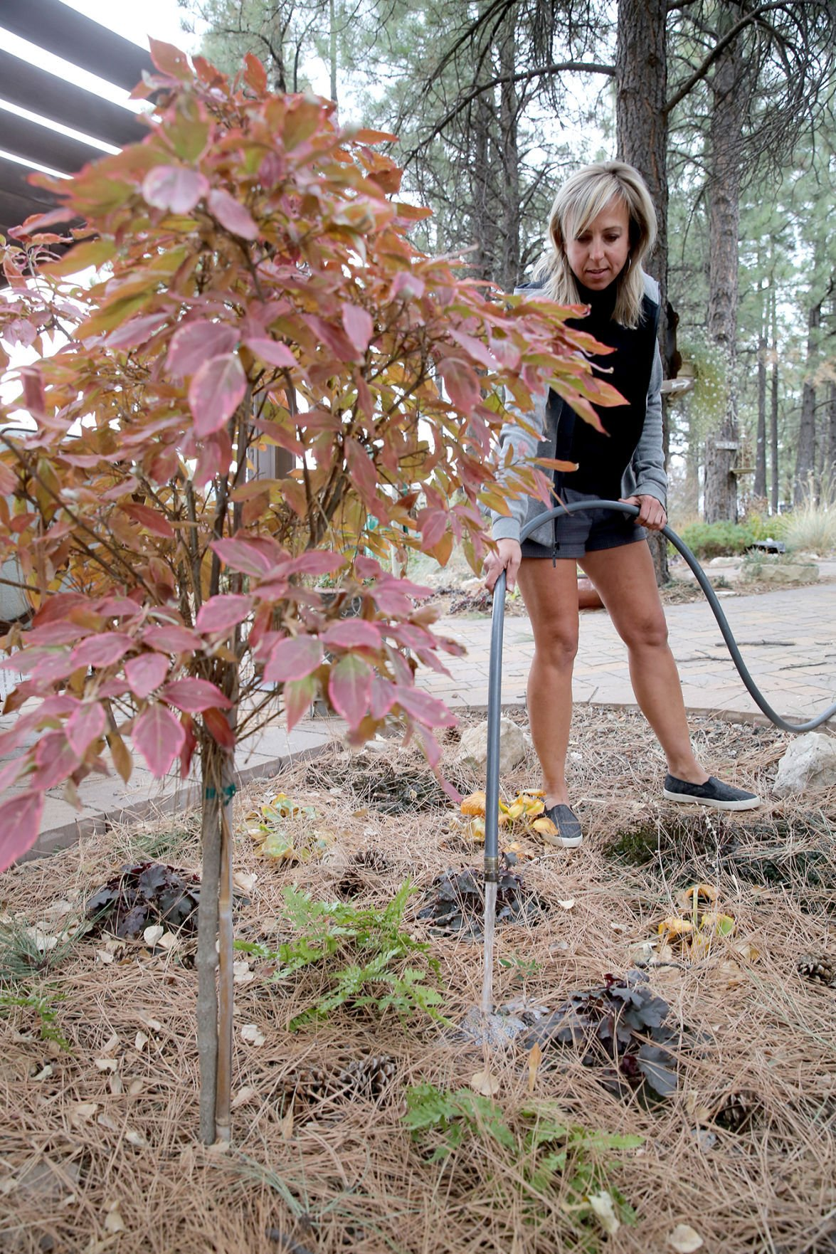 Caring For Plants in the Dry