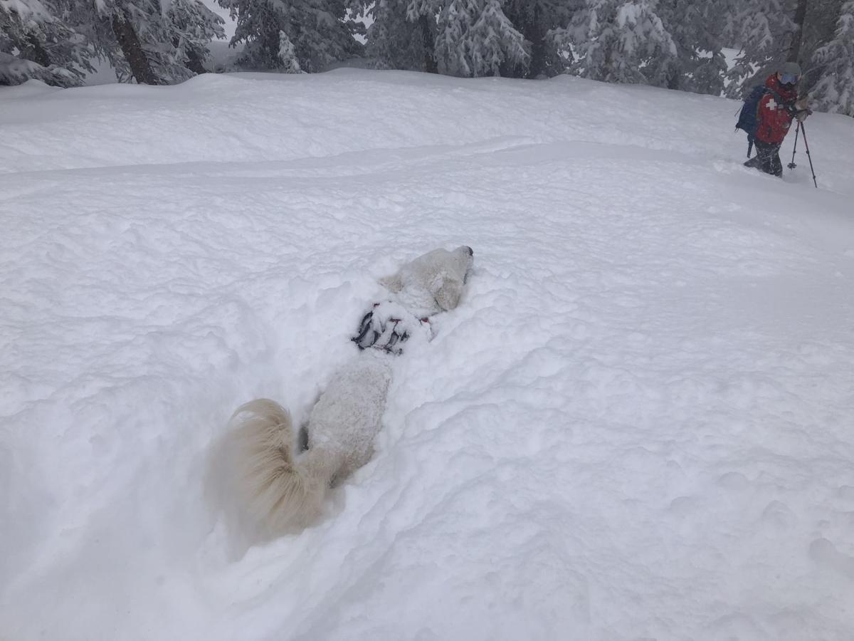 Avalanche dog Ava