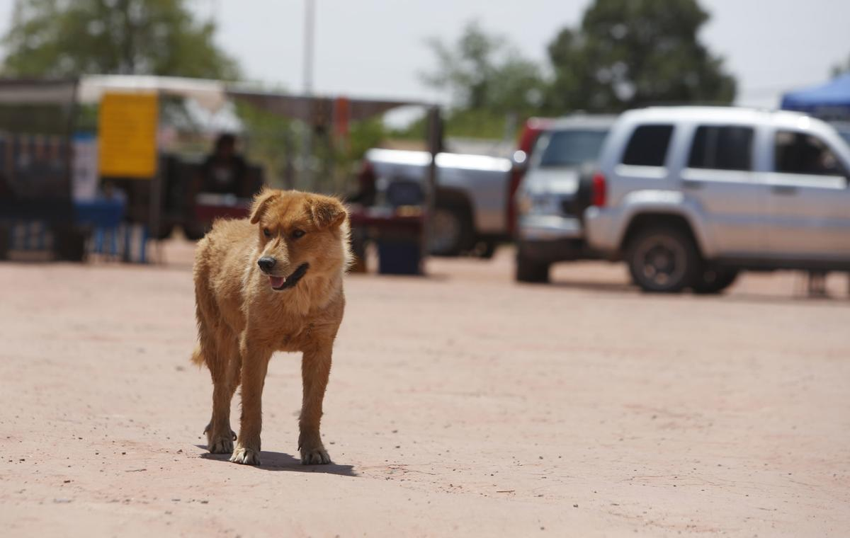 No easy answer for stray animals on the Rez | Local