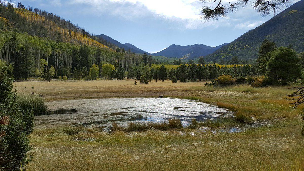 Lockett Meadow